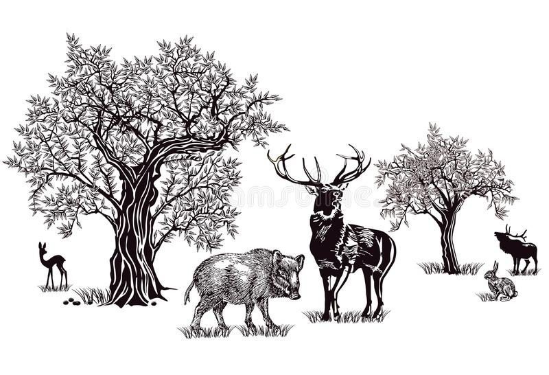 Deer and wild boar. A black and white illustration of deer, boar and rabbit on a meadow with trees vector illustration