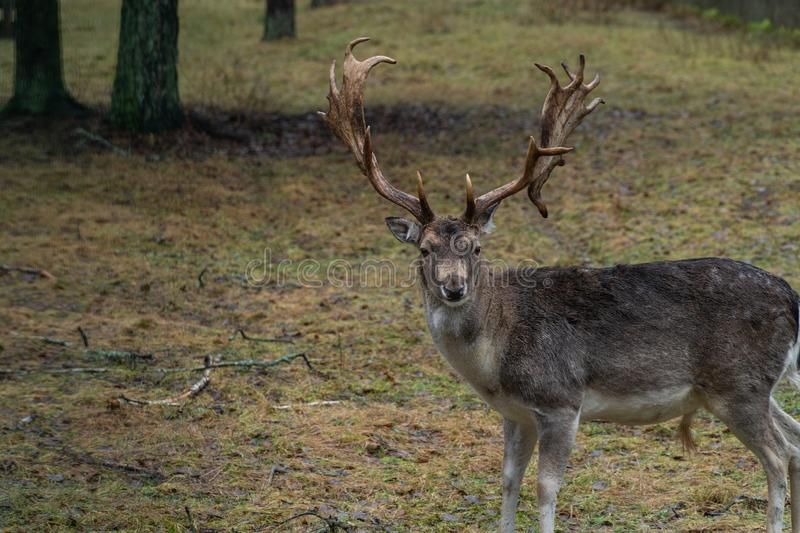 Deer in the wild in the forest stock photos
