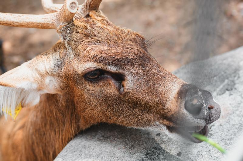 Deer in the zoo royalty free stock images