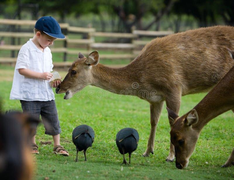 deers提供 库存图片