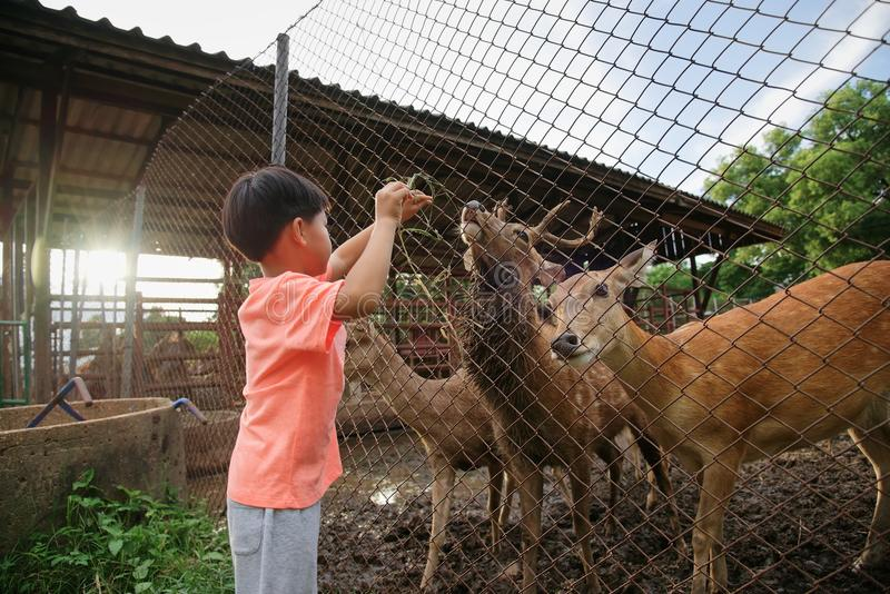 Deers σίτισης μικρών παιδιών στο αγρόκτημα στοκ φωτογραφίες