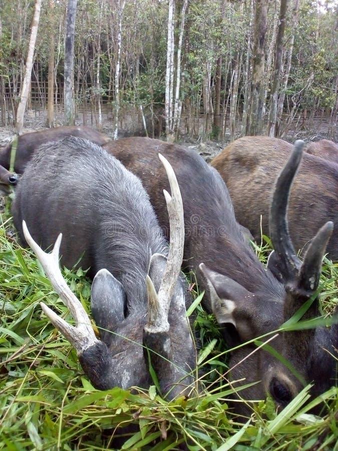 deers arkivfoton