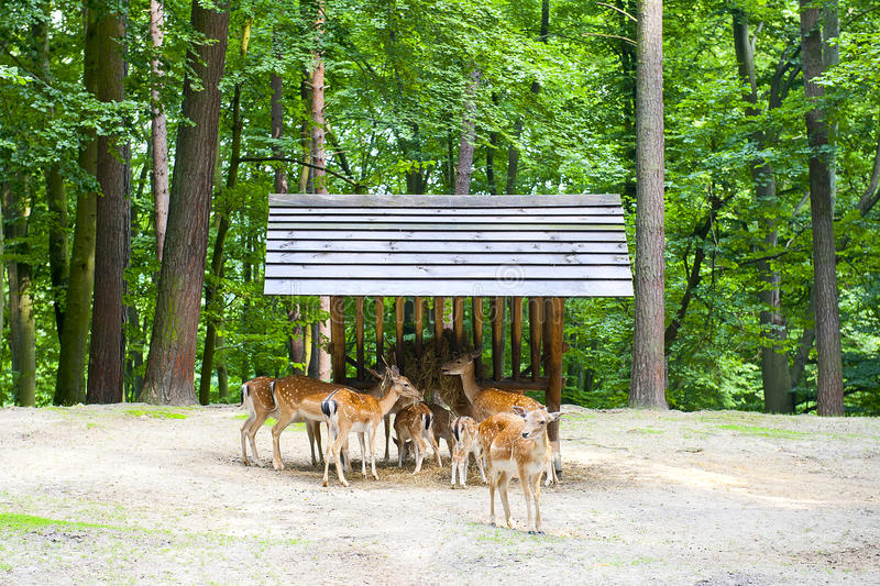 Deers Royalty Free Stock Photography