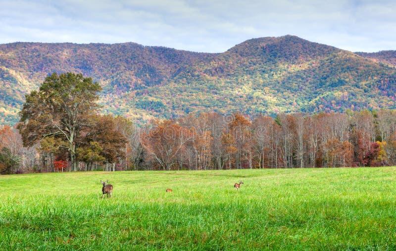 Deers obraz royalty free