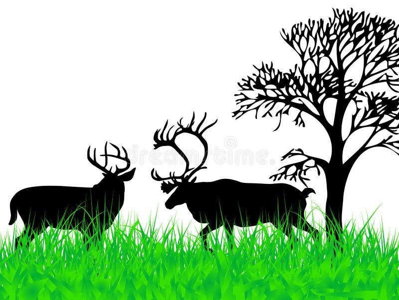 Deers auf dem Gras stock abbildung