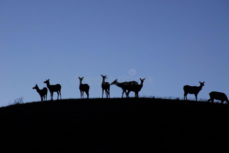 Deers bij nacht stock afbeelding