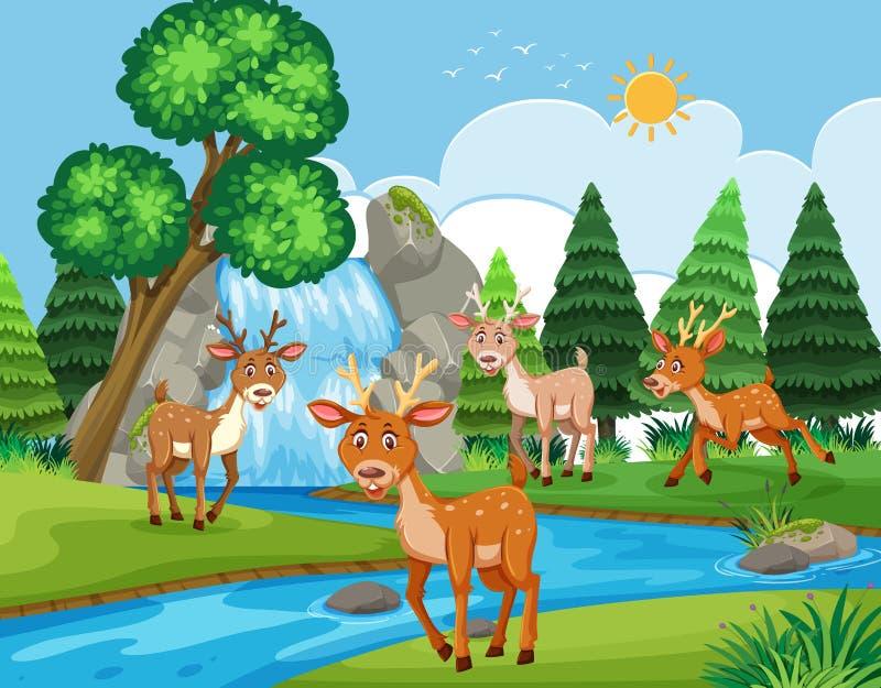 Deers i utomhus- plats vektor illustrationer
