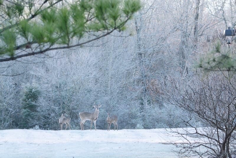 Deers in ijzig bos royalty-vrije stock foto