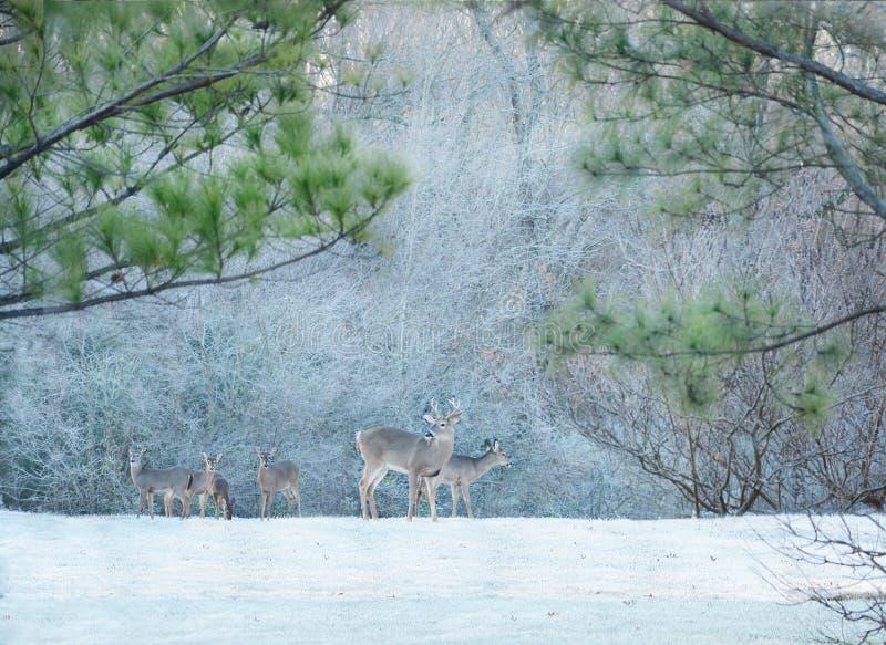 Deers in ijzig bos royalty-vrije stock foto's