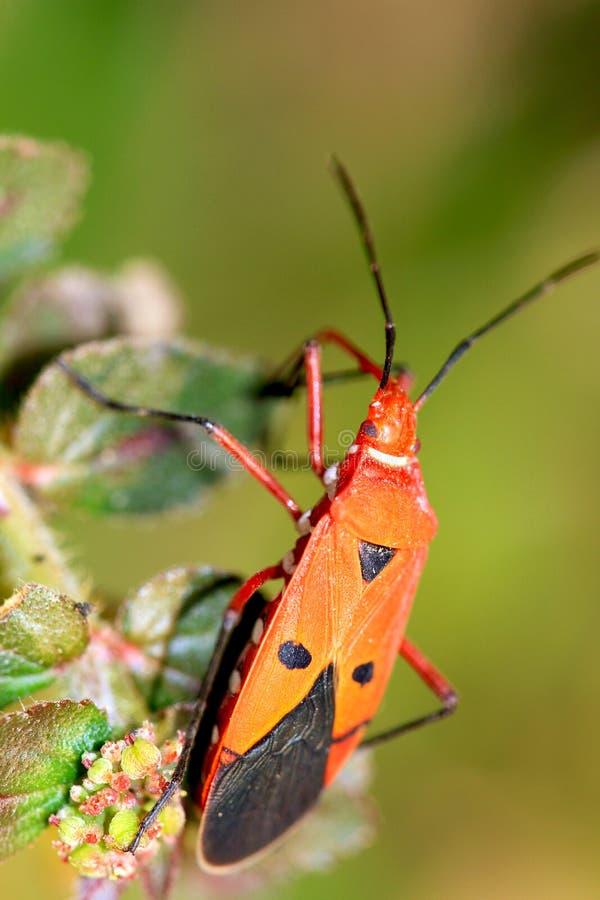 Defecate bug