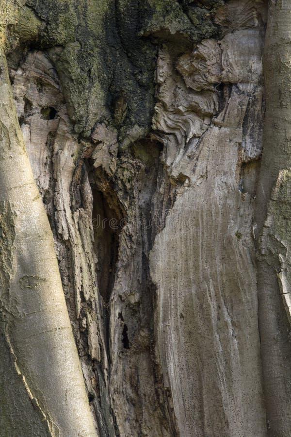 Defekte Baum-Beschaffenheit stockfotos