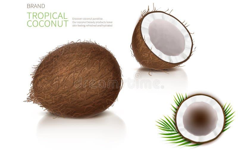 Defekte und ganze Kokosnuss lizenzfreie abbildung