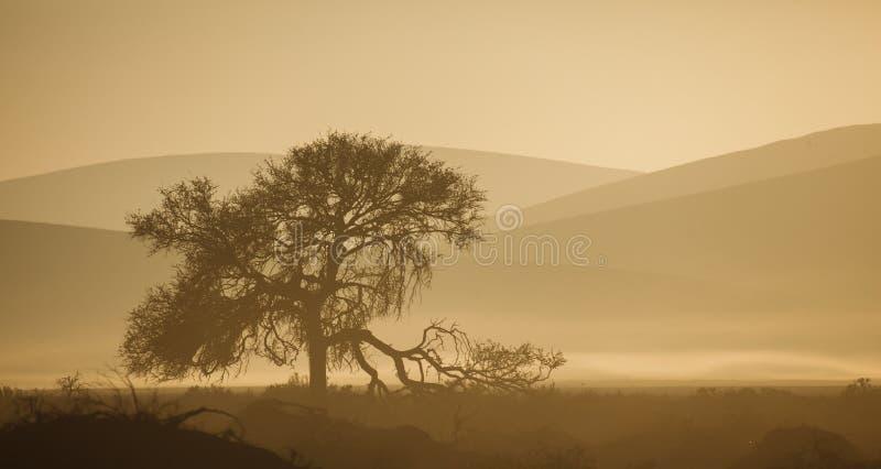 Defekter Gliedbaum silhouettiert gegen namibische Wüstendünen des Sepiatones. lizenzfreie stockbilder