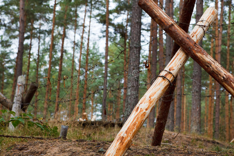 Download Defensive trench in forest stock image. Image of battlefield - 11308793