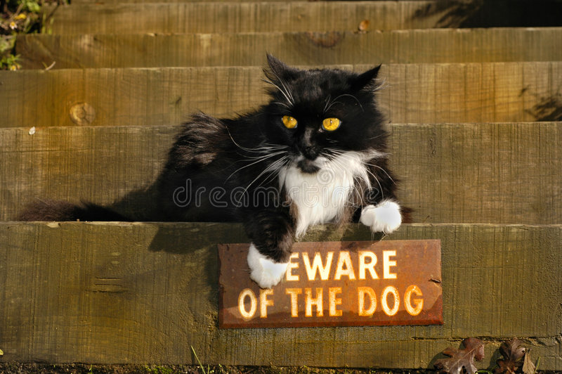 Defiant Kitty royalty free stock images