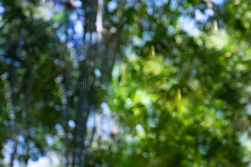 Defocus bamboo forest bokeh. For background stock photo