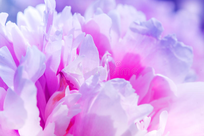 Defocus beautiful pink flowers. abstract design. With color filters stock photography