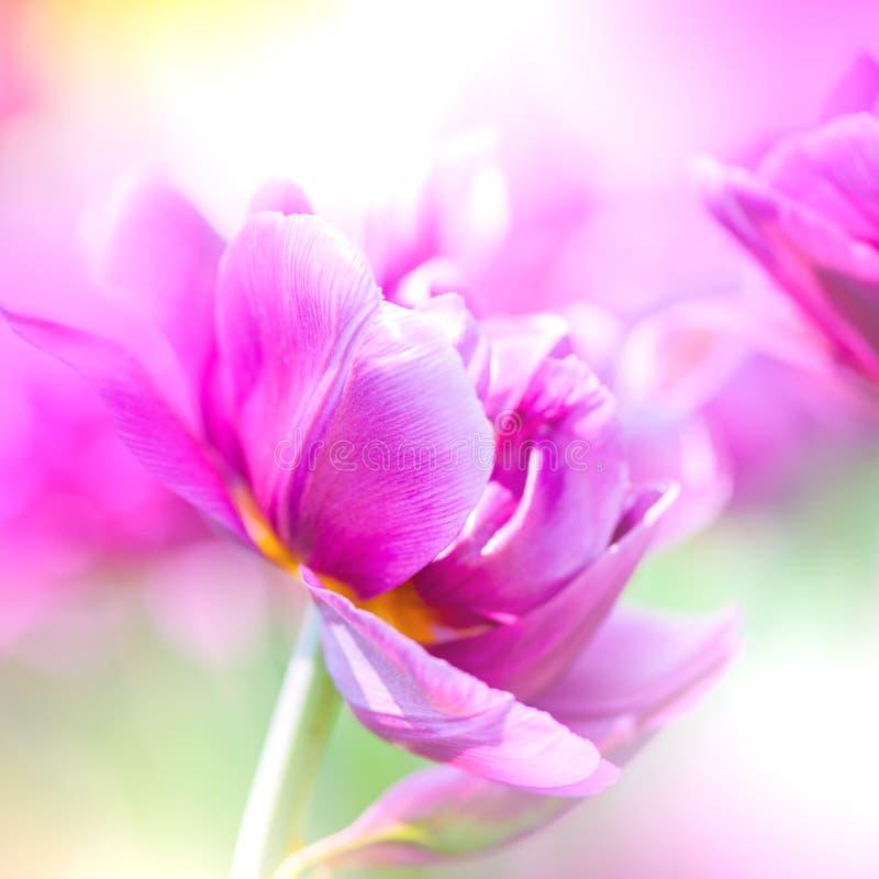 Defocus mooie purpere bloemen. royalty-vrije stock afbeeldingen