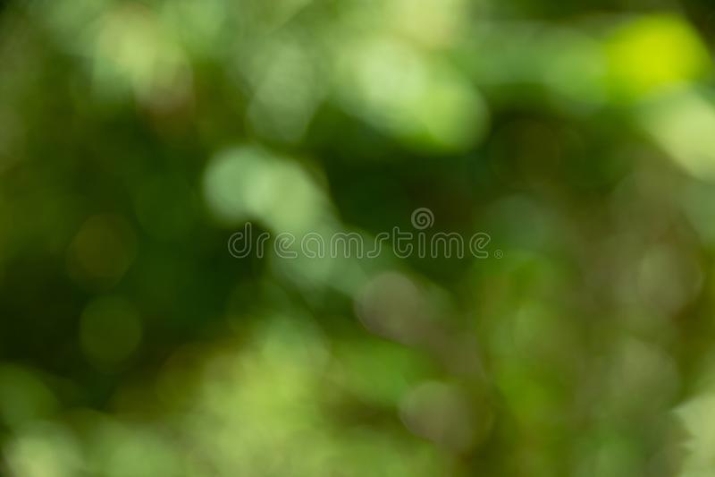 Defocused抽象绿色bokeh背景,软的背景 免版税库存图片