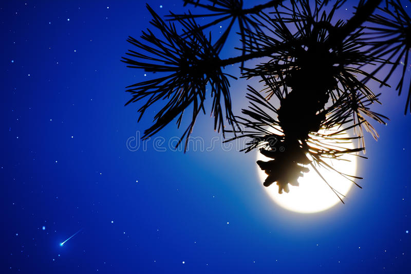 Defocused杉木分支和满月在夜空 免版税图库摄影