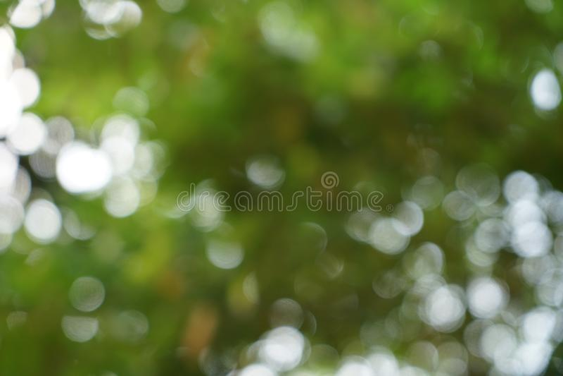 defocused自然鲜绿色的黄色叶子和白光bokeh背景美好的抽象场面  免版税库存照片