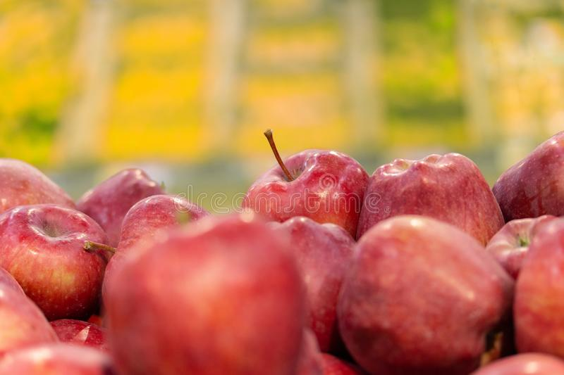 Defocused background with red apples in the foreground, horizontal fruit wallpaper. Banner, fruit shop counter stock images