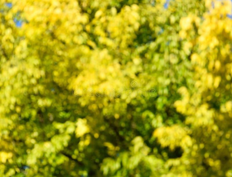 Defocused drzewo li?cie w jesieni t?o fotografia royalty free