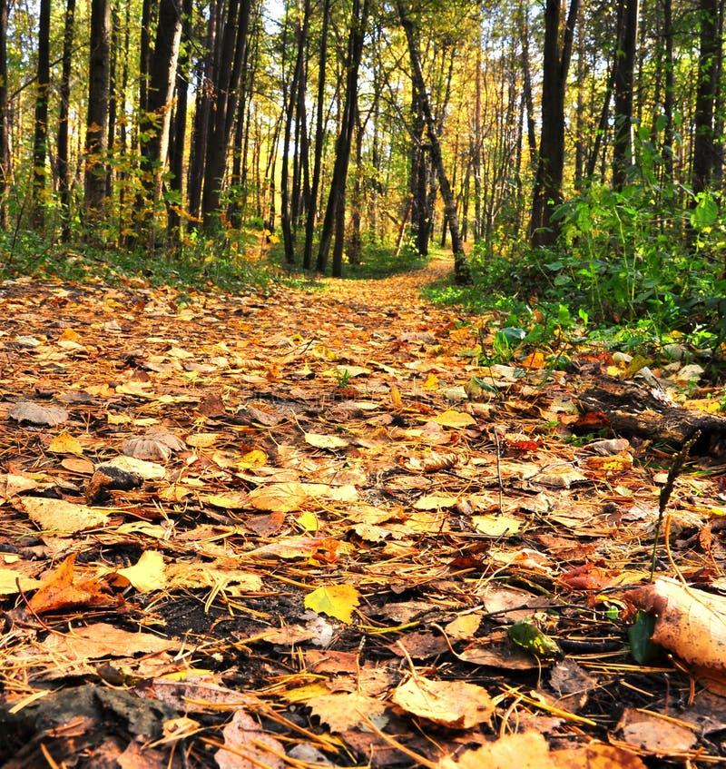 Defocused Herbstgasse stockbild