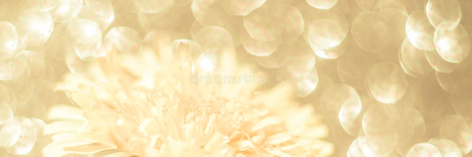 Defocused natural golden delicate floral background on a sunny day. concept of luxury, natural beauty, youth radiance stock image