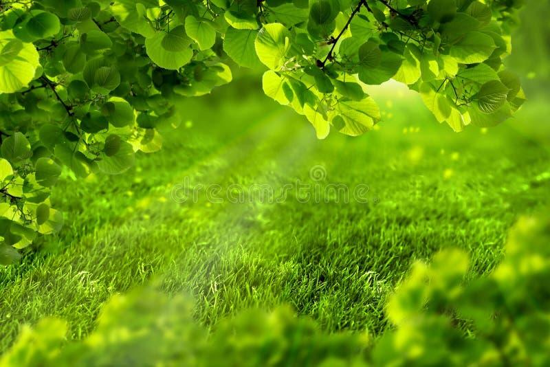 Defocused vår för härlig ecogräsplan eller sommarbakgrund med solsken Saftigt barngräs och lövverk i strålar av solljus Natur arkivfoton
