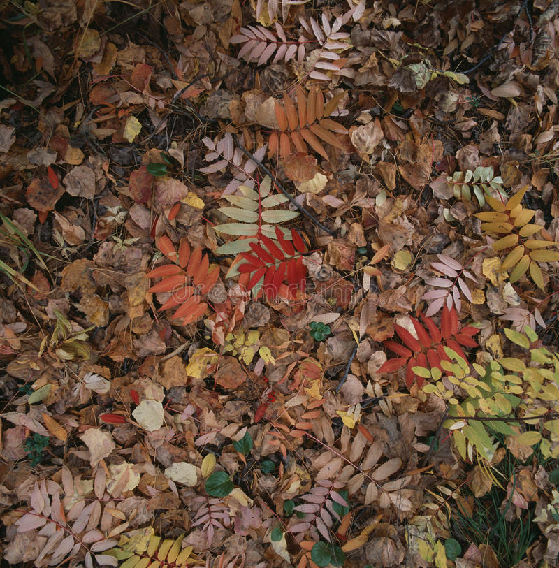 The defoliation in autumn royalty free stock photo