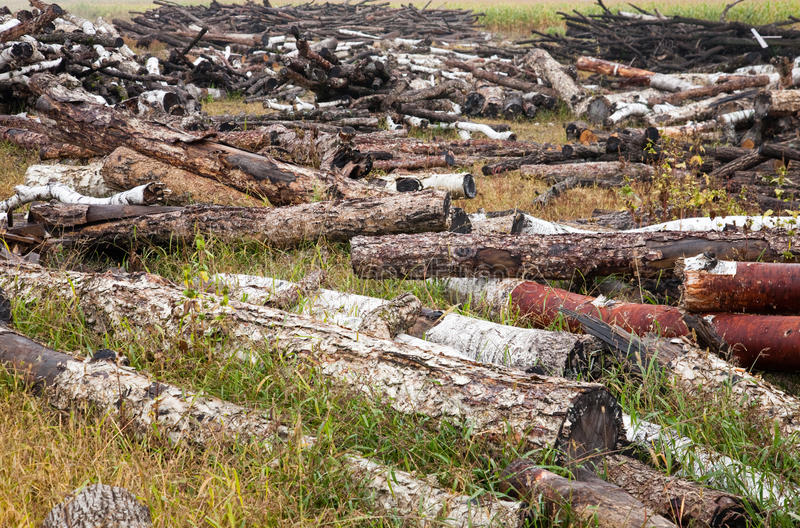 Download Deforestation stock image. Image of carbon, woodpile - 15661303