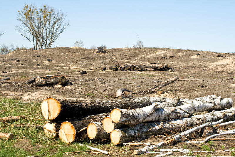 Download Deforestation stock image. Image of forest, loss, environmentalism - 23140861