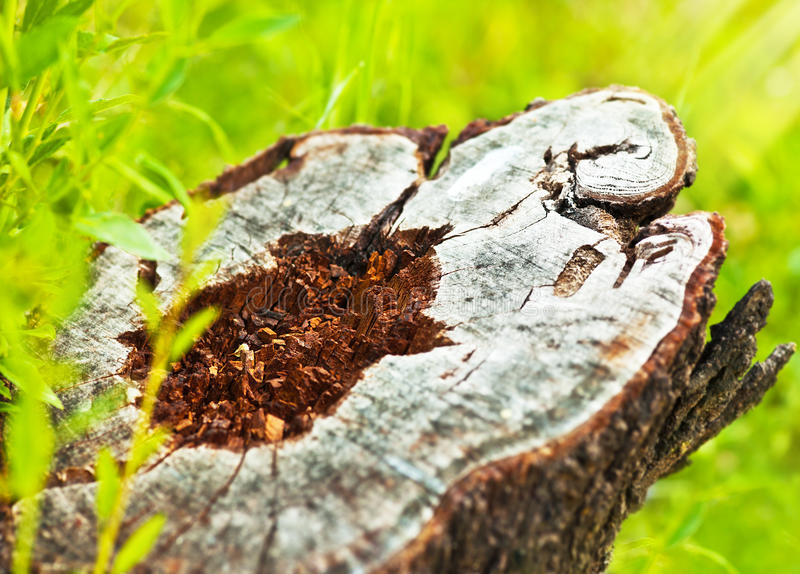 Download Deforestation Stock Image - Image: 23652891