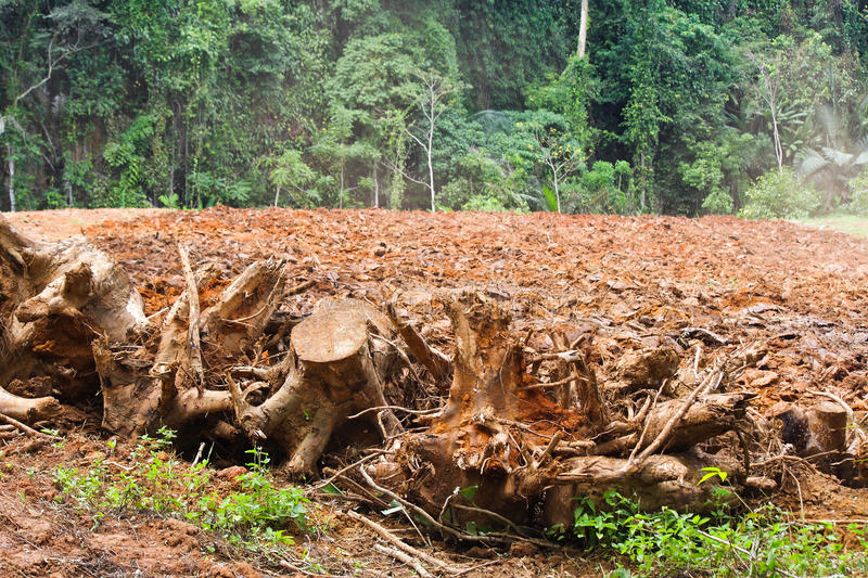 Download Deforestation stock photo. Image of forest, grass, nature - 27588158