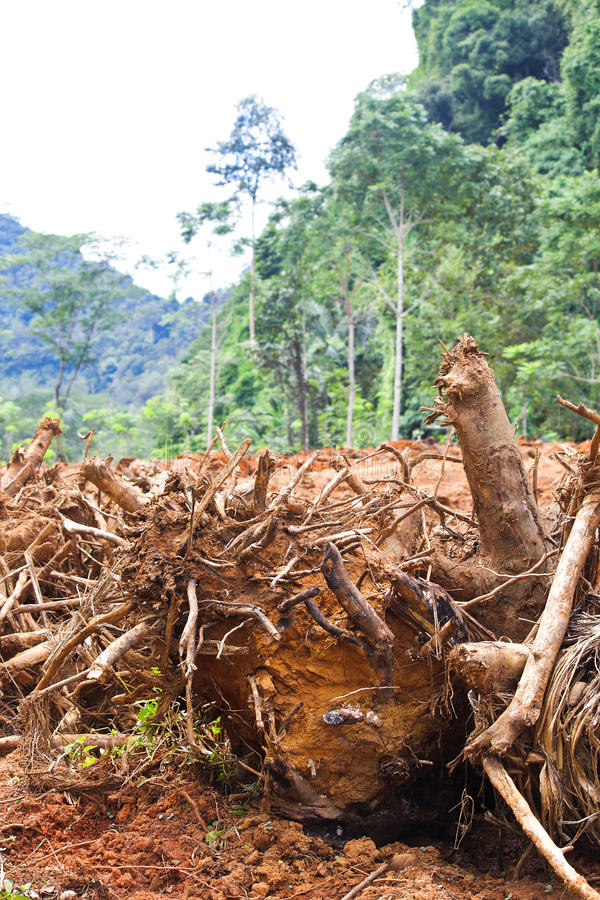 Download Deforestation stock image. Image of nature, environment - 27634451