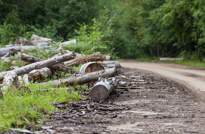 deforestation imagens de stock royalty free