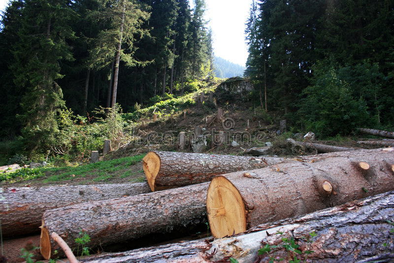 deforestation royaltyfria bilder