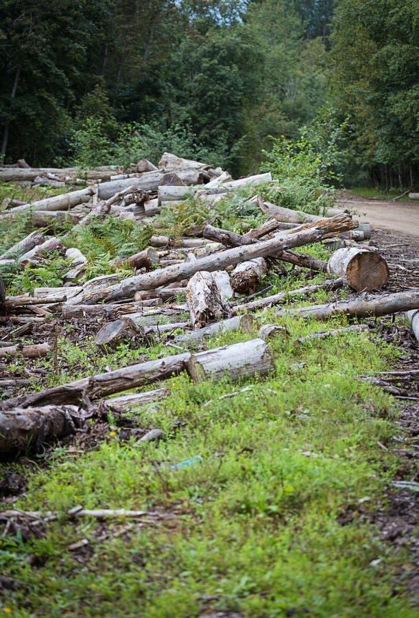 deforestation foto de stock