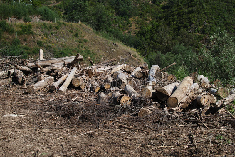 deforestation imágenes de archivo libres de regalías