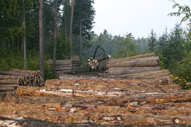 deforestation royaltyfri foto