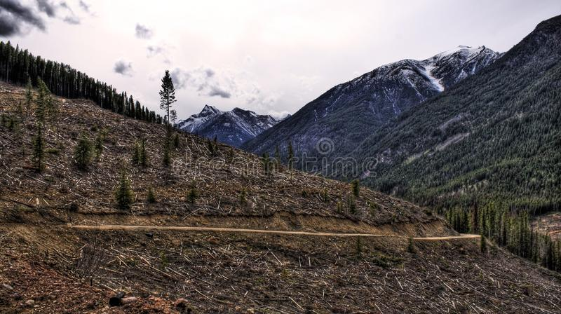 Download Deforestation stock photo. Image of purcell, kootenay - 9480328