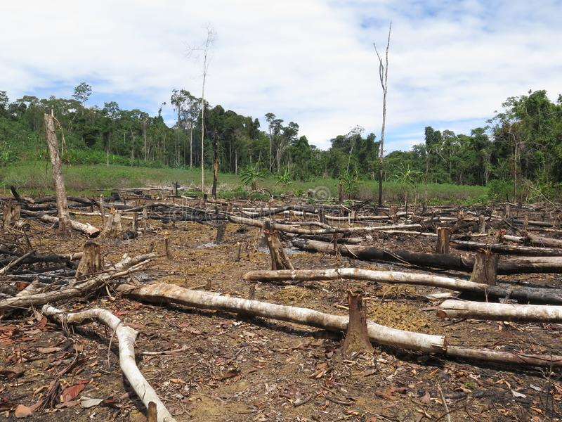 Deforestation in area in Amazonian jungle. Of South America stock image