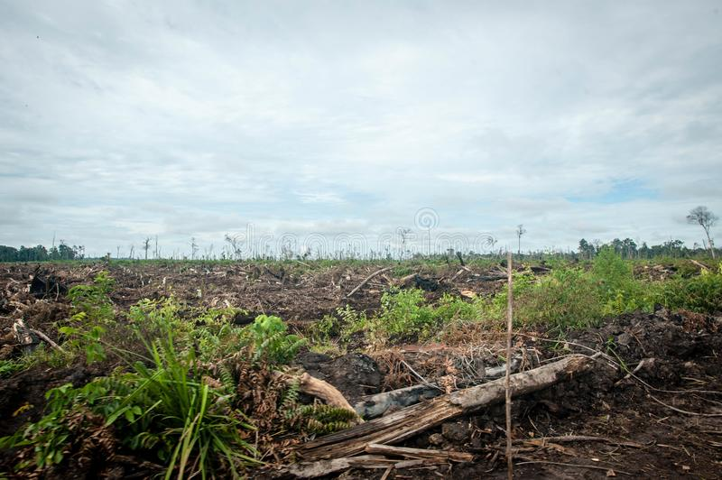 Deforestation in Borneo stock image