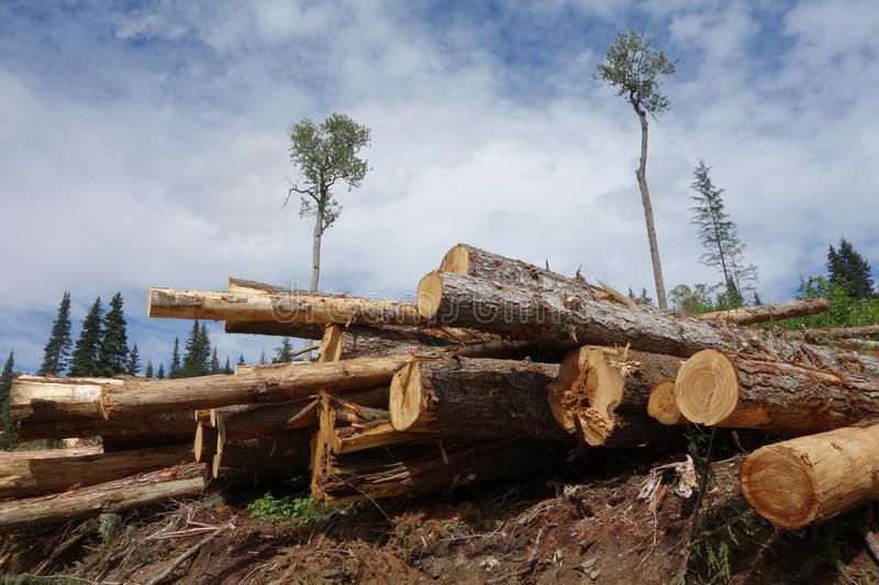 deforestation in canada essay Uxbridge, canada (ips) - the world's last remaining forest wilderness is rapidly being lost -- and much of this is taking place in canada, not in brazil or indonesia where deforestation has so far made the headlines.