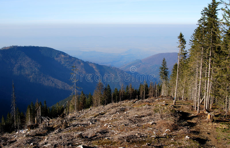 Deforestation in Carpathians royalty free stock images