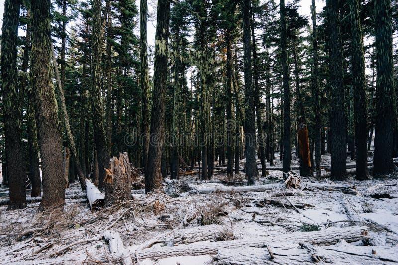 Deforestation Free Public Domain Cc0 Image