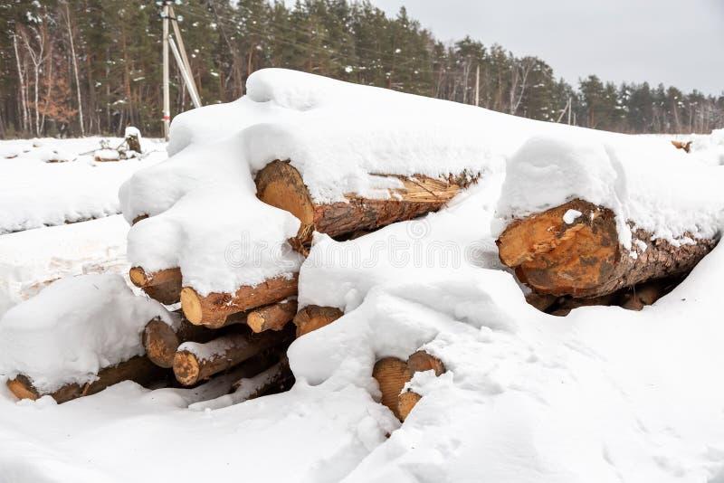 deforestation Cosecha de la madera de construcción Registros bajo nieve Acción de la madera en nieves acumulada por la ventisca d imágenes de archivo libres de regalías