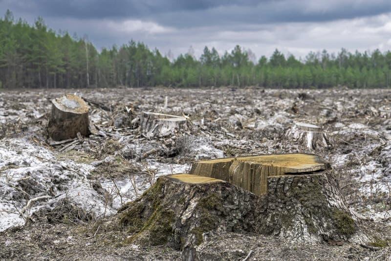 deforestation Coto da árvore após ter cortado a floresta fotografia de stock