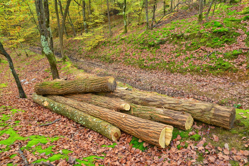 Deforestation. Cut tree logs in the forest, deforestation stock images